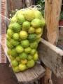 limones-al-por-mayor-1.JPG