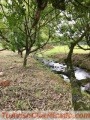 Quintas privadas en Guapiles