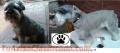 Peluquería canina a domicilio / con retiro/ o atencion en local