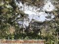 Vendo lotes en el cerro canajagua de 500mt2