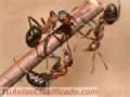 Fumigaciones para combatir todo tipo de plagas en maracaibo zulia