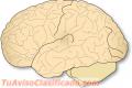 Salud del Cerebro Organizacional