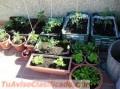 clases-de-hortalizas-3.jpg