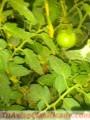 clases-de-hortalizas-5.jpg