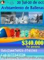 SEPARA CON $30.000 AVISTAMIENTO DE BALLENAS