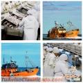 pescados-y-mariscos-congelados-vepez-distribuidor-mayorista-merluza-calamar-langostino-5.jpg