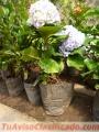 Jardineria Senderos