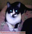 gatitos-en-adopcion-1.JPG
