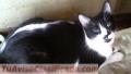 gatitos-en-adopcion-2.JPG