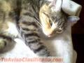 gatitos-en-adopcion-3.JPG