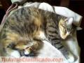 gatitos-en-adopcion-4.JPG