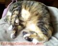 gatitos-en-adopcion-5.JPG