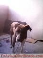 Doy en adopcion a este hermoso cachorro de 7 meses