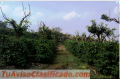 Finca para Invertir en Alajuela