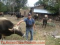 Vendo terreno por motivo de viaje en la ciudad de ucayali en el km 36 carretera